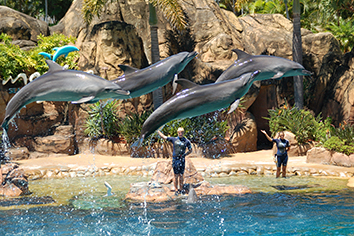 dolphins jumping_sea world