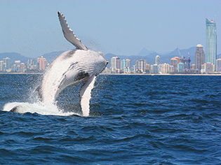 Whalesbr